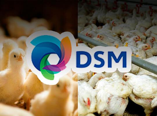 Núcleos nutricionales DSM